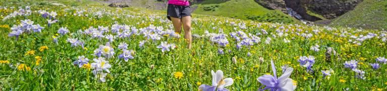 telluride wildflower trails